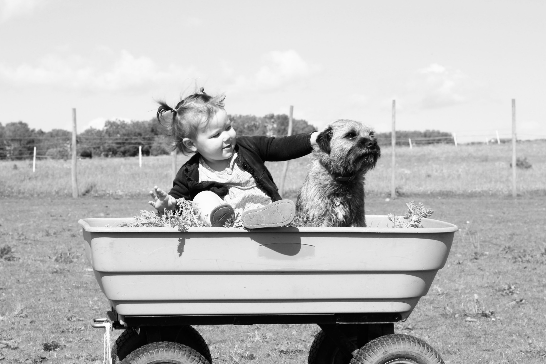nina con perro en carro