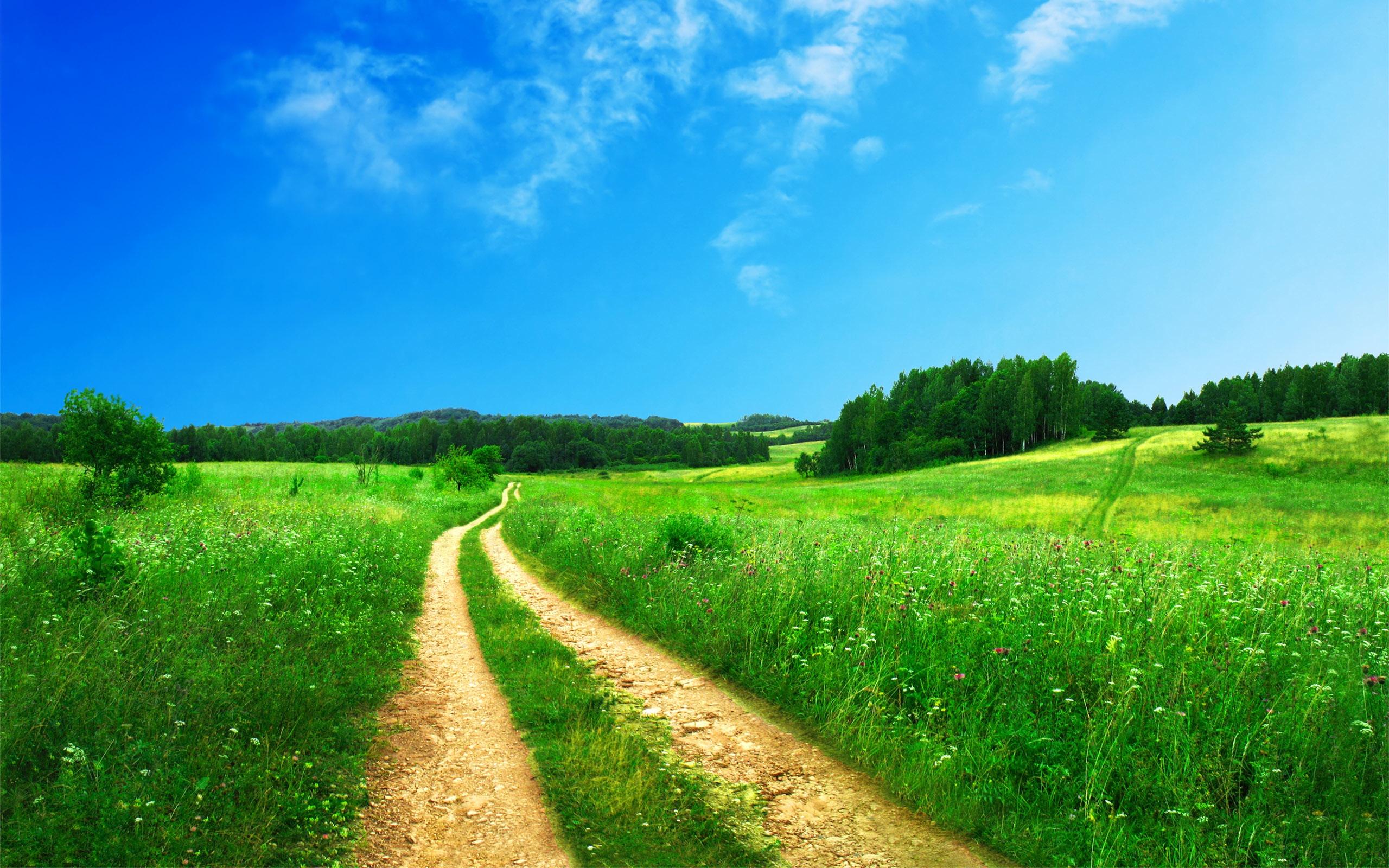 camino amarillo en el campo verde con cielo azul
