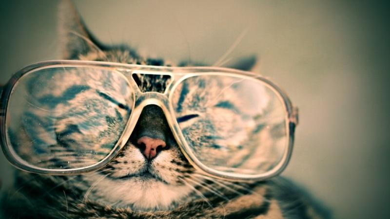 gato gafas