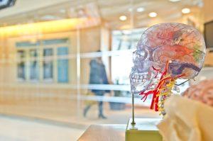 cerebro de plastico